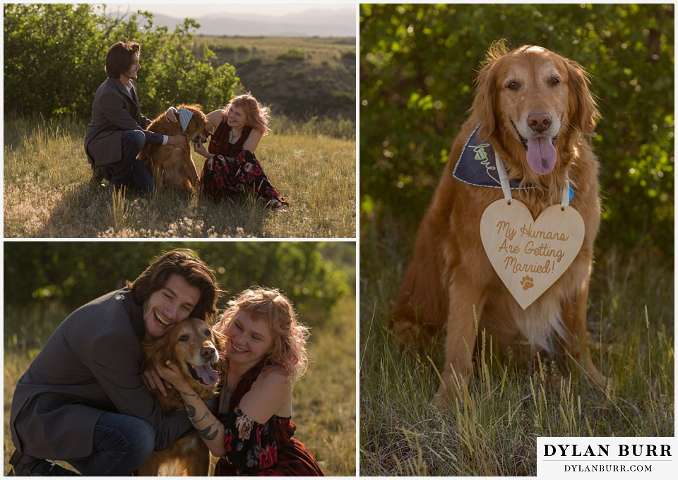 castle rock colorado engagement session golden retriever my humans are getting married