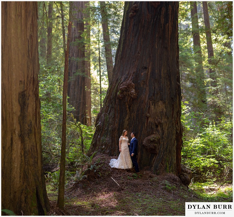 redwood forest wedding elopement avenue of the giants california bride and groom