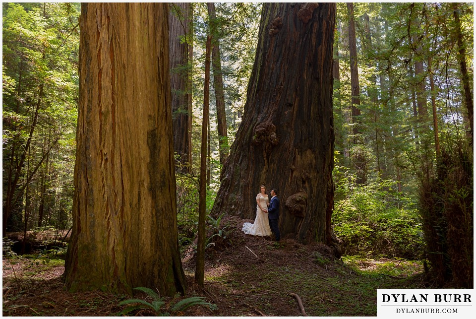 redwood forest wedding elopement avenue of the giants california wide view of bride and groom standing in front of giant redwood tree