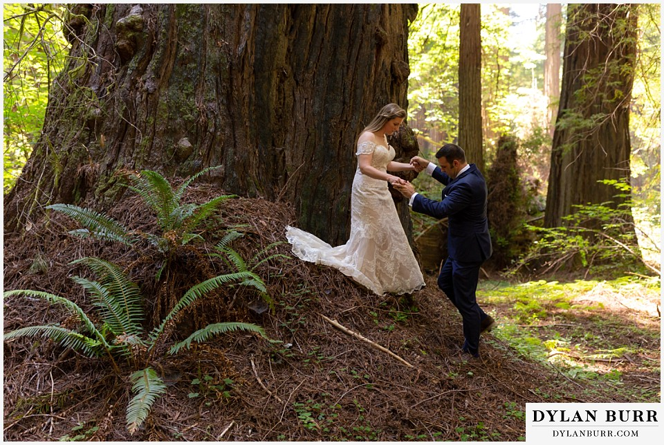 redwood forest wedding elopement avenue of the giants california bride and groom climbing down tree