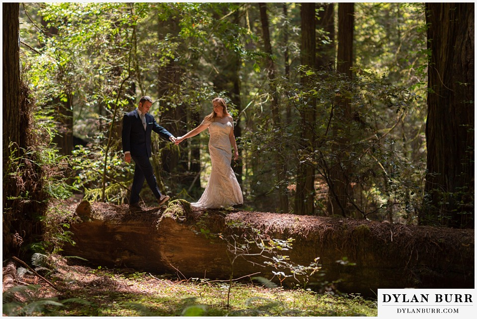 redwood forest wedding elopement avenue of the giants california bride and groom walking across fallen tree