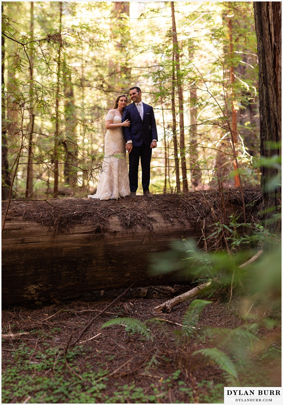 redwood forest wedding elopement avenue of the giants california bride and groom on top of tree
