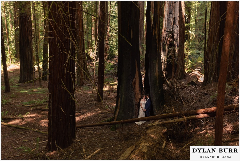 redwood forest wedding elopement avenue of the giants california bride and groom standing inside giant split tree