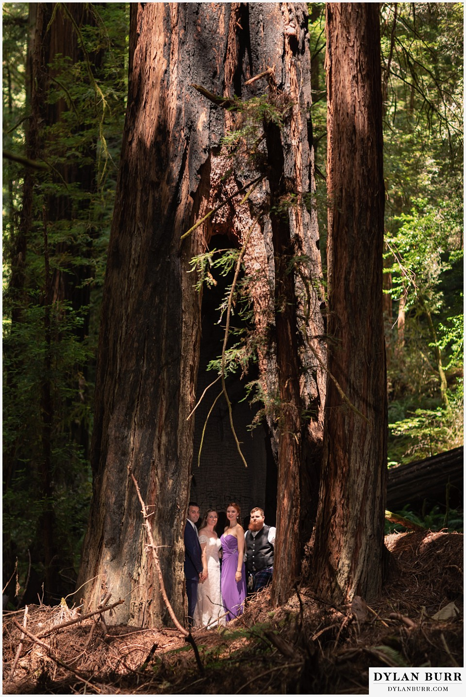redwood forest wedding elopement avenue of the giants california entire bridal party inside giant tree