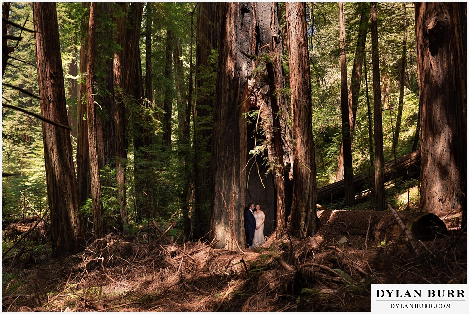 redwood forest wedding elopement avenue of the giants california bride and groom standing inside massive redwood tree