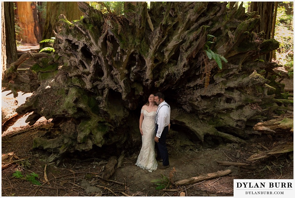redwood forest wedding elopement avenue of the giants california bride and groom laughing in front of giant fallen tree