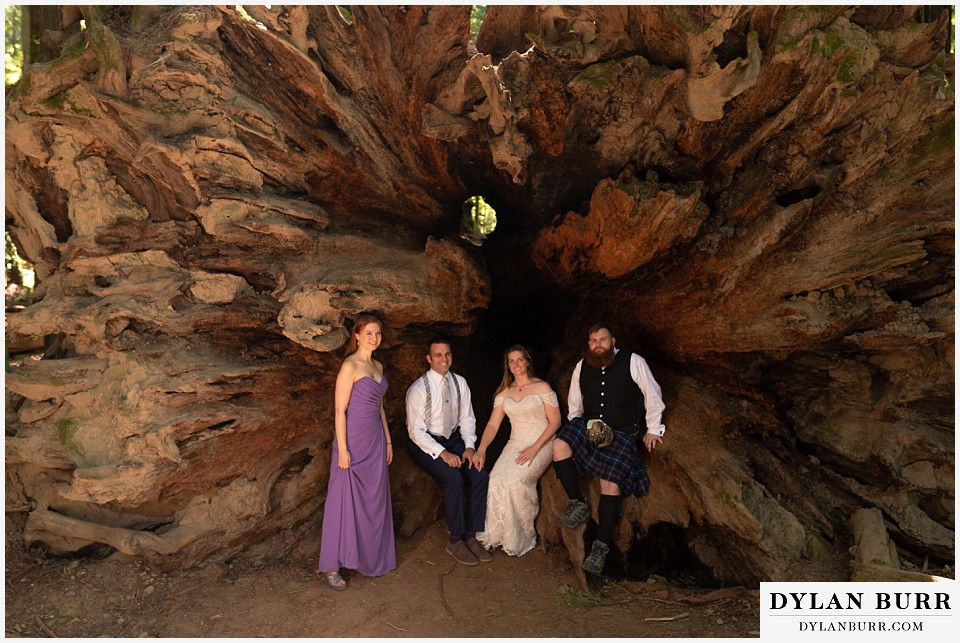 redwood forest wedding elopement avenue of the giants california bridal party inside fallen tree stump