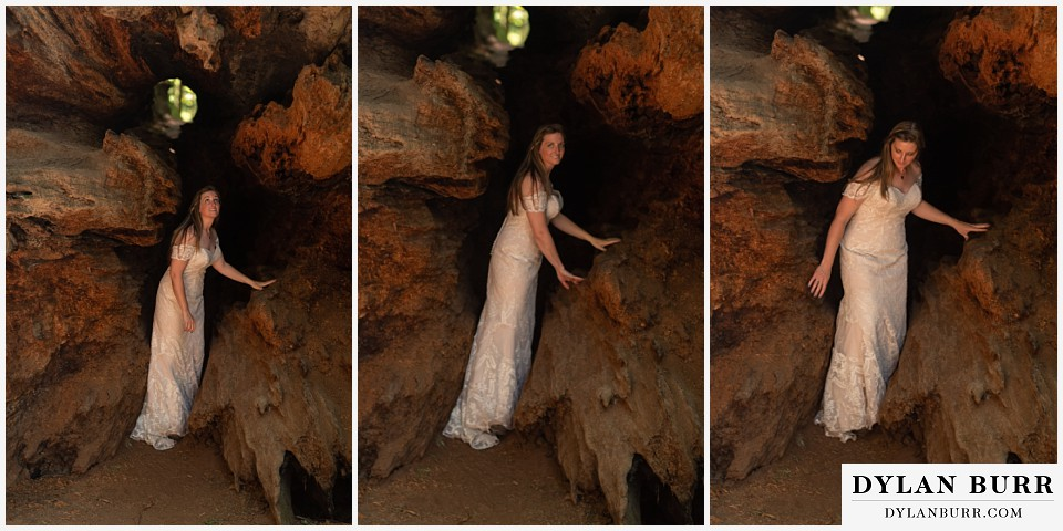 redwood forest wedding elopement avenue of the giants california bride looking around inside fallen tree