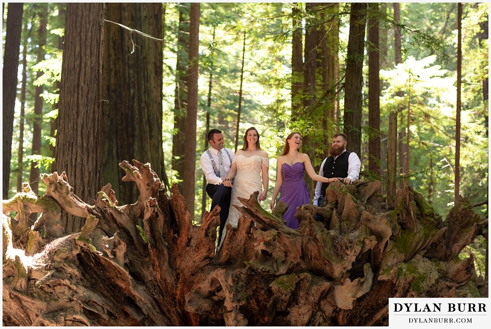 redwood forest wedding elopement avenue of the giants california bride, groom, maid of honor, and best man on top of giant fallen tree