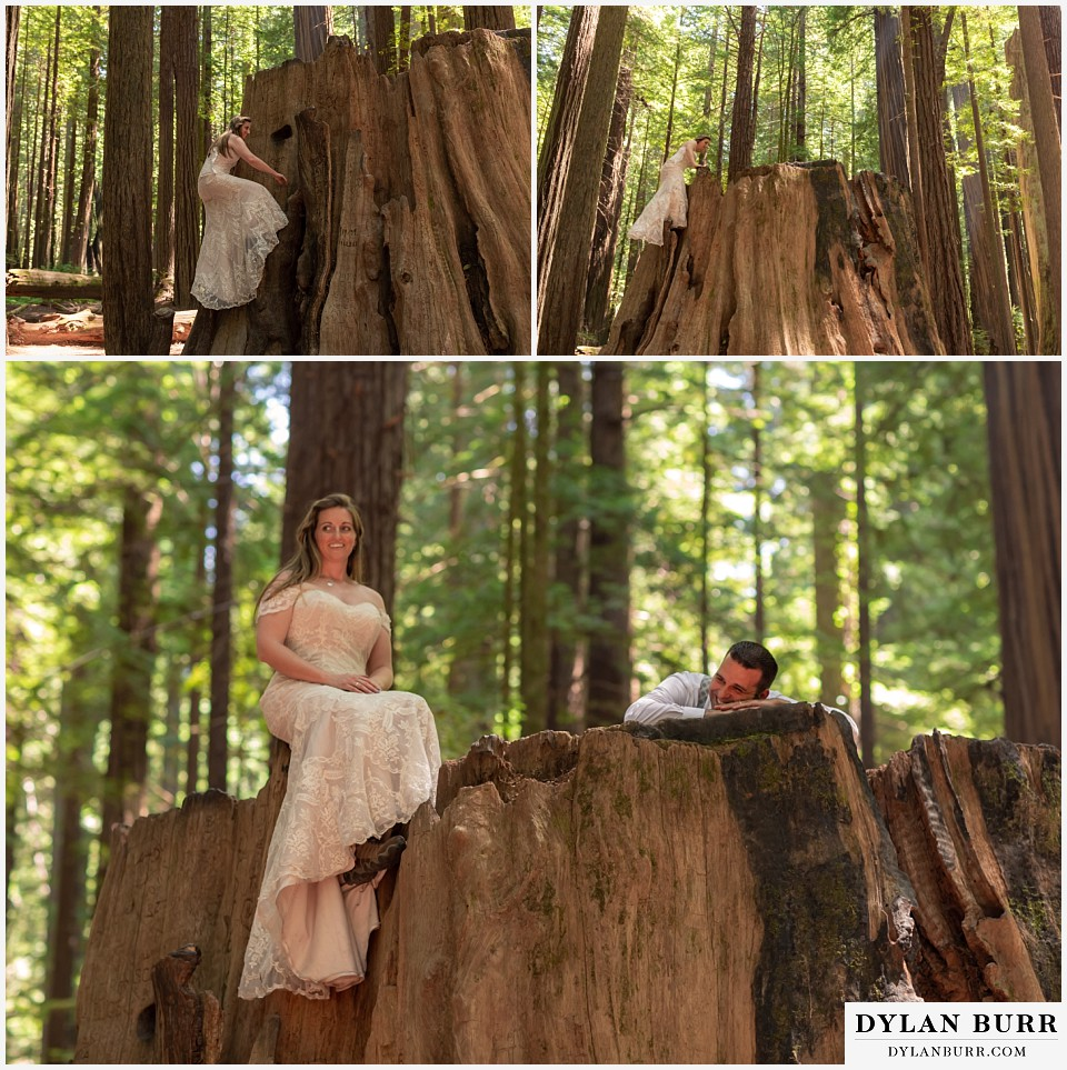 redwood forest wedding elopement avenue of the giants california bride climbing up giant tree
