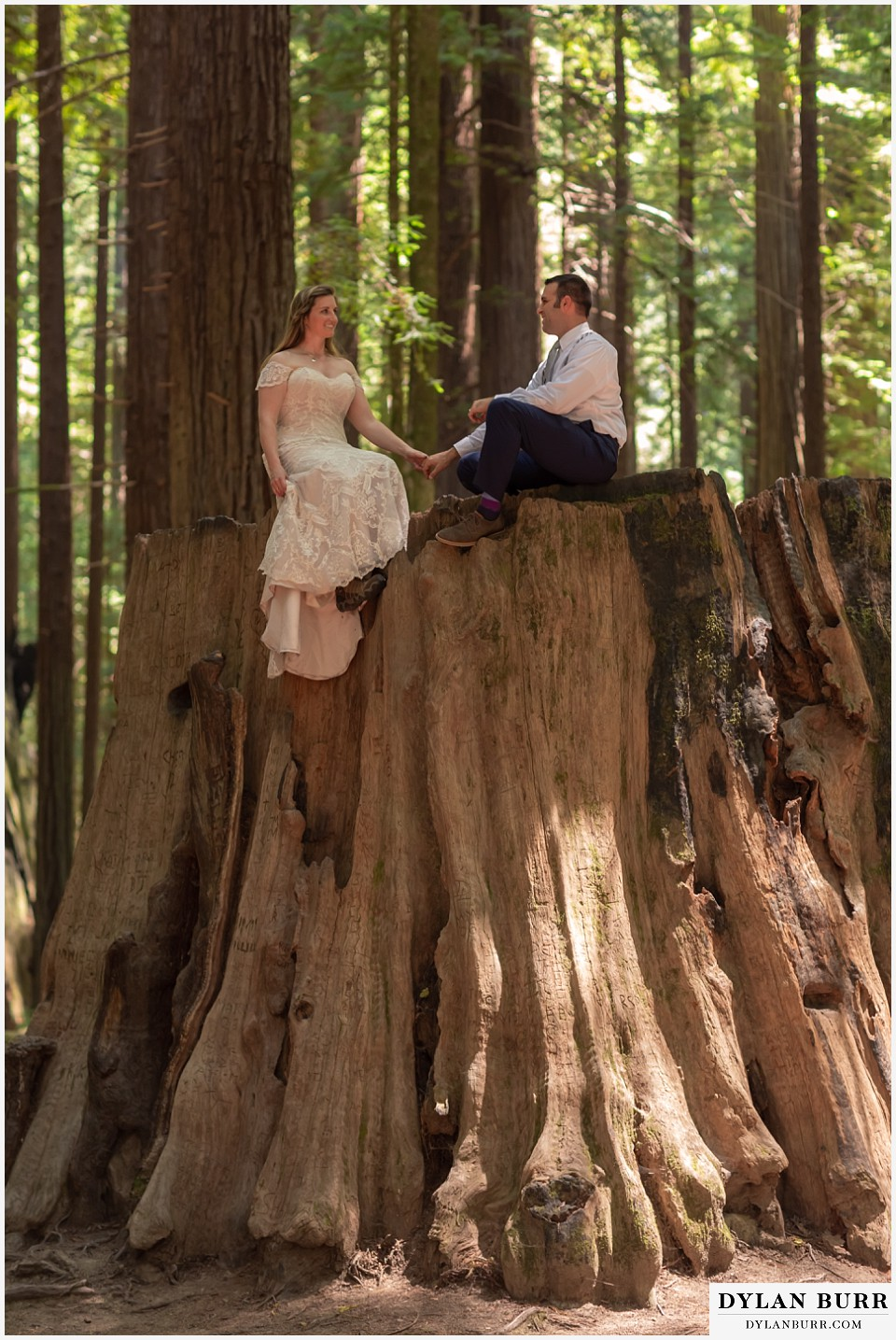 redwood forest wedding elopement avenue of the giants california bride and groom sitting on giant tree stump
