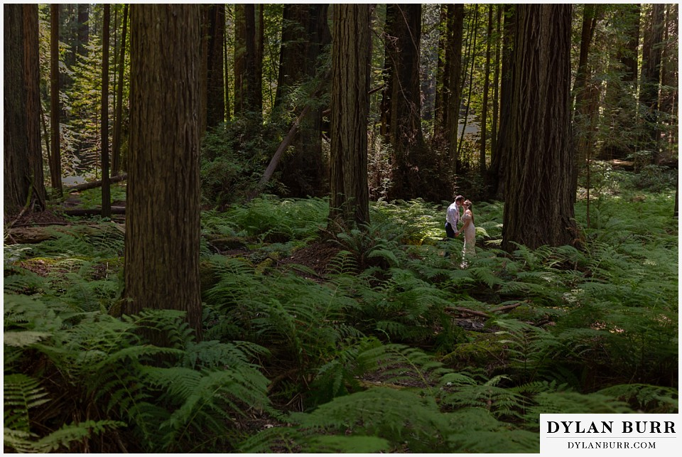 redwood forest wedding elopement avenue of the giants california bride and groom surrounded by huge ferns