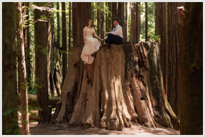 redwood forest wedding elopement avenue of the giants california