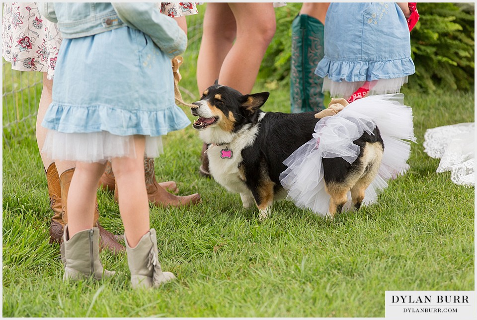 wedding dogs corgi bridesmaid outdoor wedding montrose colorado