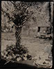 wedding tintype wetplate table setting large standing vase rustic branches earthy bohemian
